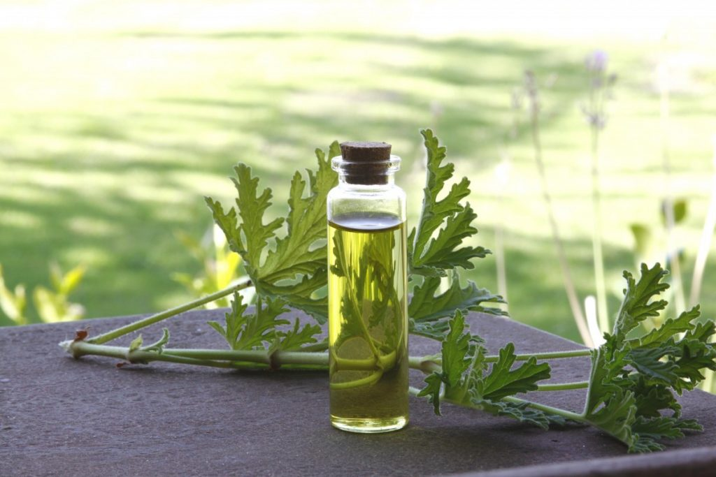 Mystery   Herbal Healing   Choose Happy   Health & Wellness   Brambel Cottage   Jacqueline Fairbrass